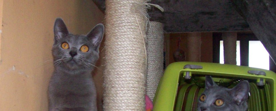 Caratteristiche fisiche carattere cure colori del gatto - Immagine del gatto a colori ...